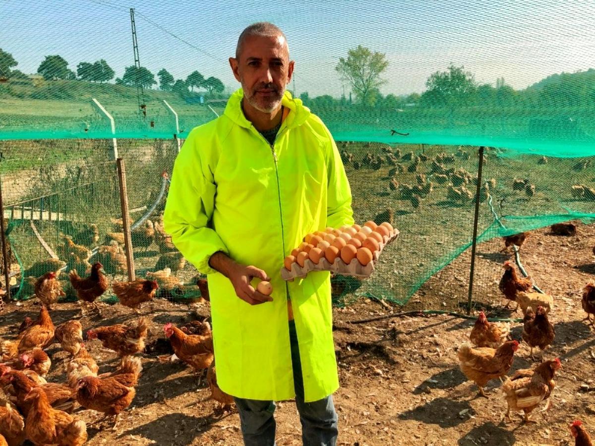 Gezen tavuk yumurtalarına ilgi büyük