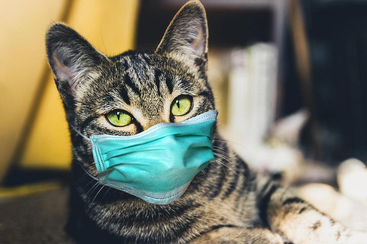 Kedilere sokağa çıkma yasağı!