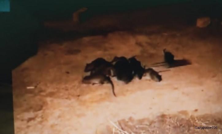 Yıldırım'ın ortasında fareler cirit atıyor! (Özel Haber)